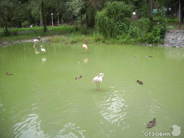киевский зоопарк (украина, киев) фото