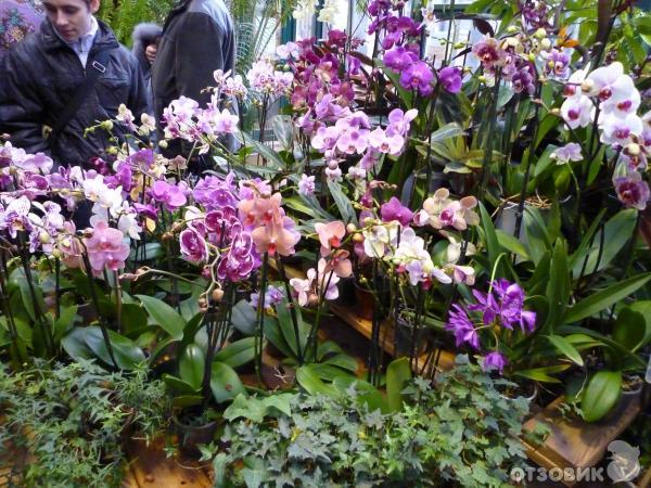 III Зимний Фестиваль орхидей в Ботаническом саду МГУ