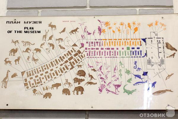 Зоологический музей в
