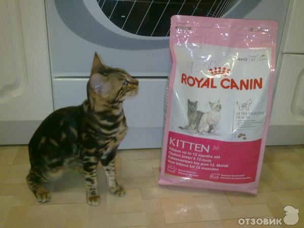 Корма Корма для кошек Роял Канин - Интернет-магазин
