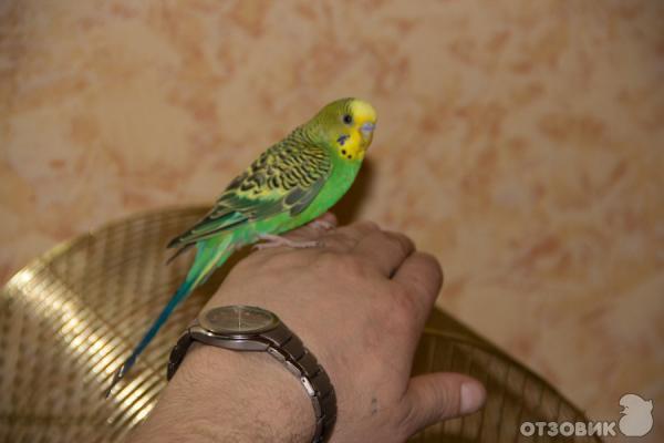 Домашнее порно больших попугаев