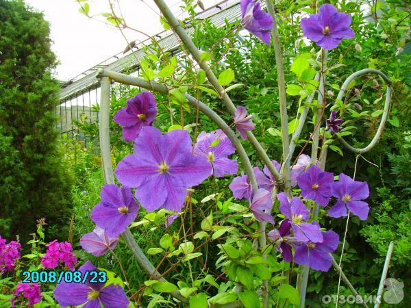 Отзыв: Ботанический сад БИН РАН (Россия, Санкт-Петербург) - Тихая спокойная атмосфера.