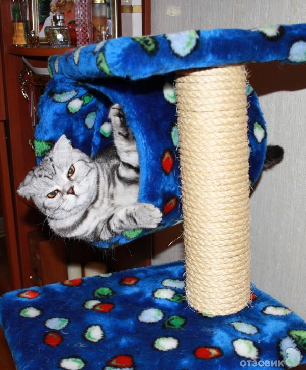 Когтеточка для кошек  мастер класс с пошаговым фото для начинающих 38