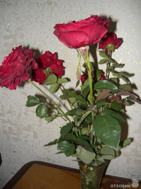 Наклейки на цветы фото