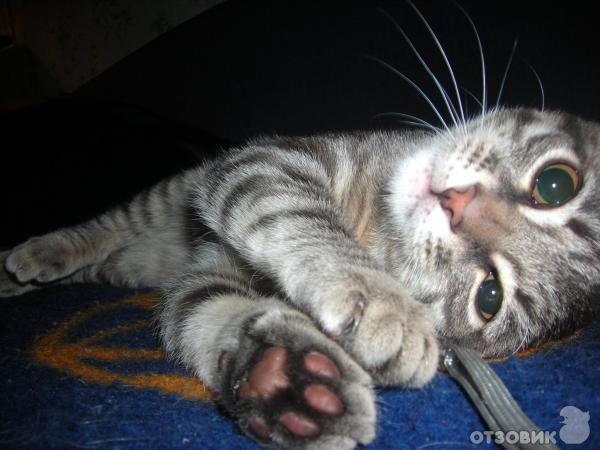 Акция Whiskas Подарок для вашего котенка фото