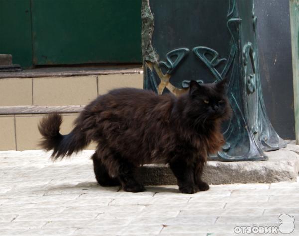 Был булгаковский кот бегемот