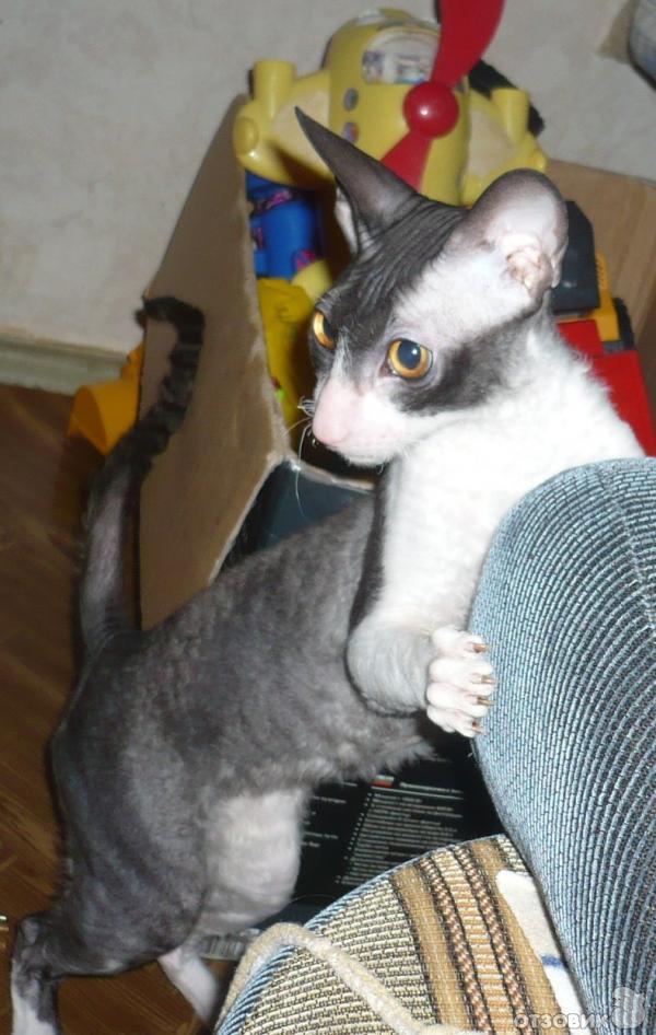 двухкомнатных тайота имя для котенка нами диван-тоде вертится,но