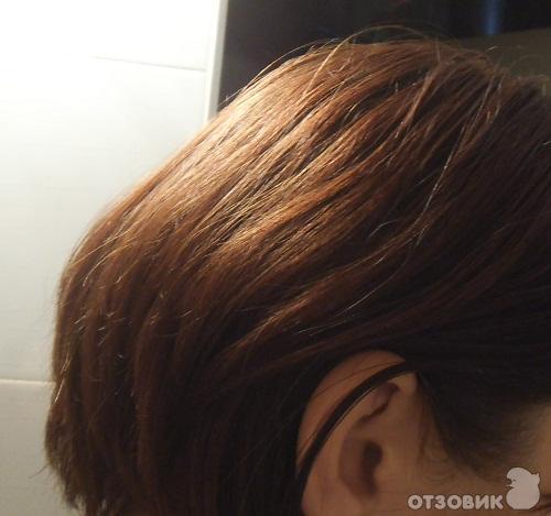 цвет лесной орех фото:
