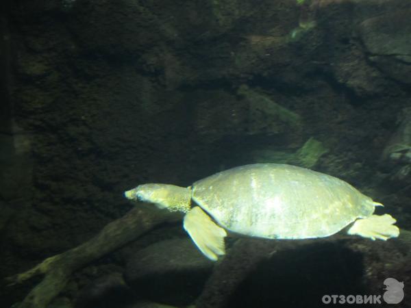 Национальные Зоопарк и Аквариум (Австралия, Канберра) фото