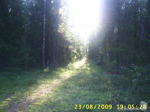 Фото сиуч вологодская область