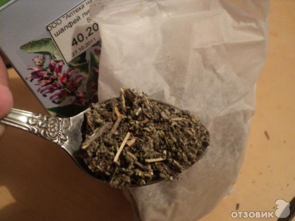 Марихуана с шалфеем марихуана голова болит